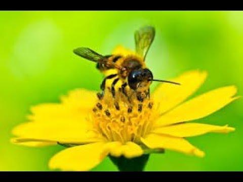 Ловля роев 2018. Можно ли поймать пчел только на одни полоски вощины? Пчеловодство.