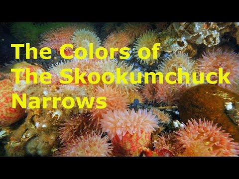 Amazing Underwater Skookumchuck