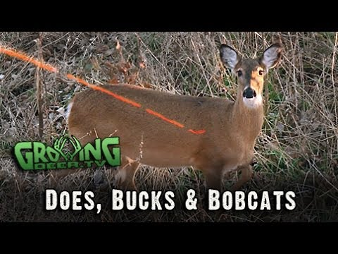 Bow Hunting In The Late Season: 2 Doe Kills Mean Venison For The Freezer! (#216) @GrowingDeer.tv