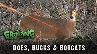 Bow Hunting In The Late Season: 2 Doe Kills Mean Venison For The Freezer!  #216