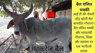 Gaushala tour : Kankrej cow gaushala : bull run chakki : बैल चलित चक्की : कांकरेज गाय : योगेश स्वामी
