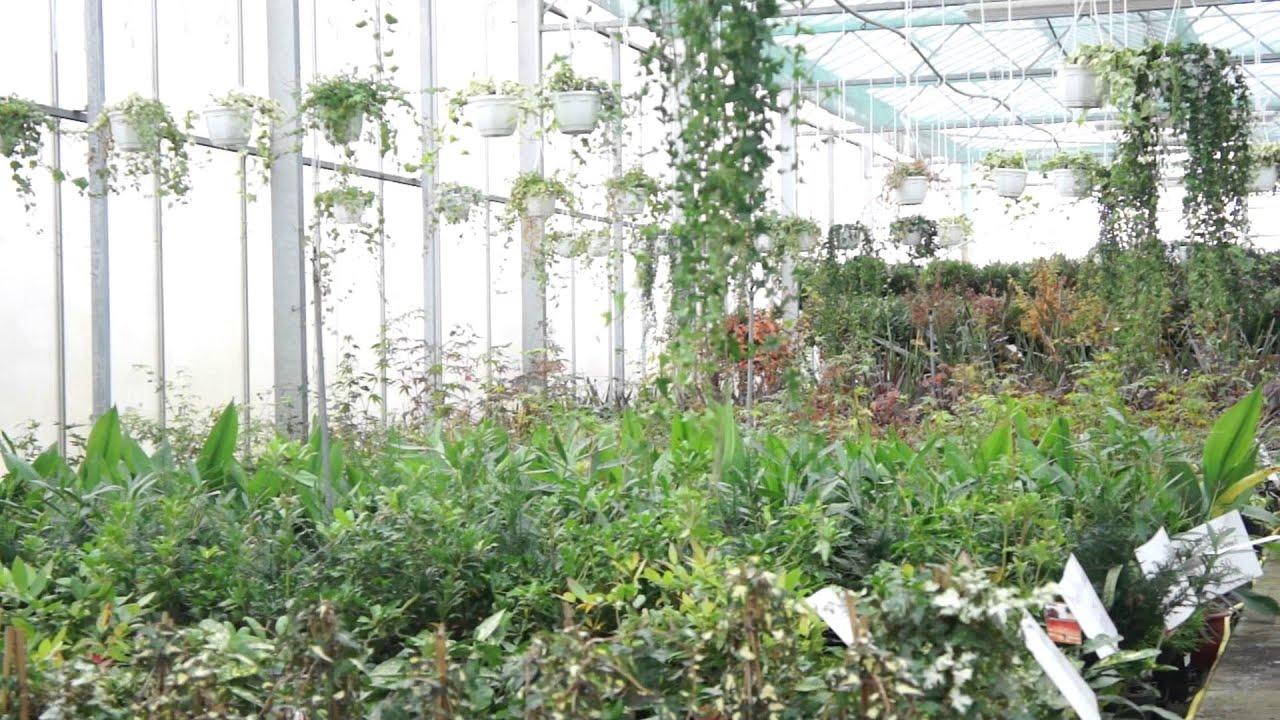 Savin Wholesalers - Florist Wholesale Suppliers - YouTube