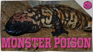 Gila Monsters are the WORST!