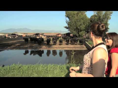 Torre Lupara - Dairy Farm Tour
