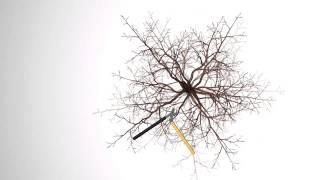 Обрізка фруктових дерев :: Міні інструкція - 4