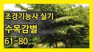 조경기능사 실기 수목감별 61~80