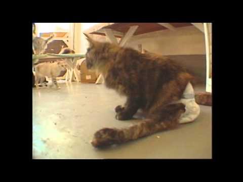 Santa Barbara Cat Lady