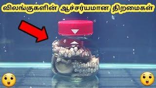 விலங்குகளின் திறமைகள்    Talented Animals    Tamil Galatta News