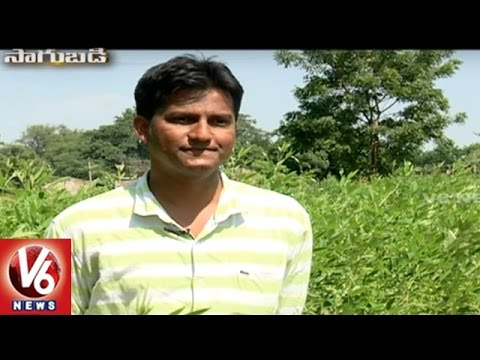 Success Story Of Organic Farmer Rajinikantha Rao | Sagubadi | V6 News