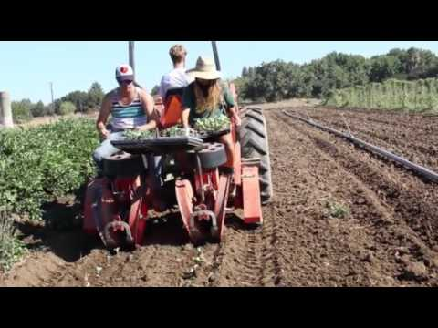 Life on the UC Davis Student Farm