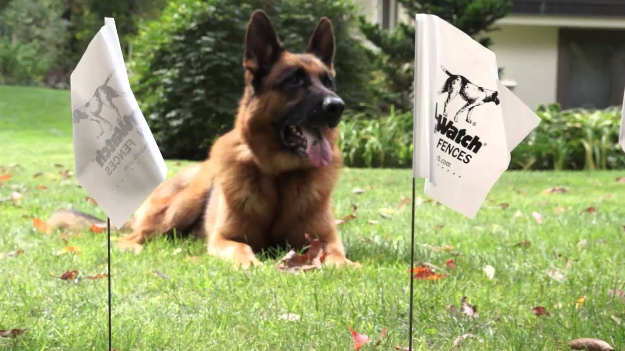 Hidden Fence brand - Invisible Fence® created dog fence