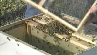 Honey Bees and Beekeeping 2.2: Recieving and Installing Package Bees