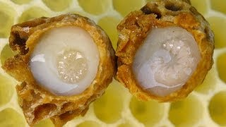 QUEEN BEE + HER ROYAL JELLY!