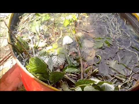 Чаи из трав, травяные чаи: ТОП-5 самых полезных трав для