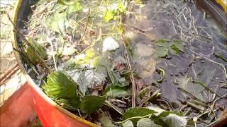 Как приготовить настой из травы Жидкий компост