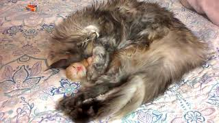 Cat hugging a kitten.Кошка обнимает котенка.
