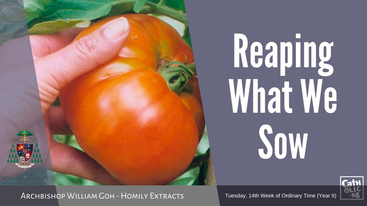Reaping What We Sow - Homily by Archbishop William Goh (07 July 2020)