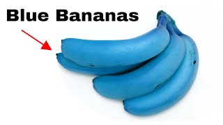 Why Are These Bananas Blue?
