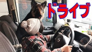 grandchild and German Shepherd dog 日産セレナ活躍中 中古車でも元気...
