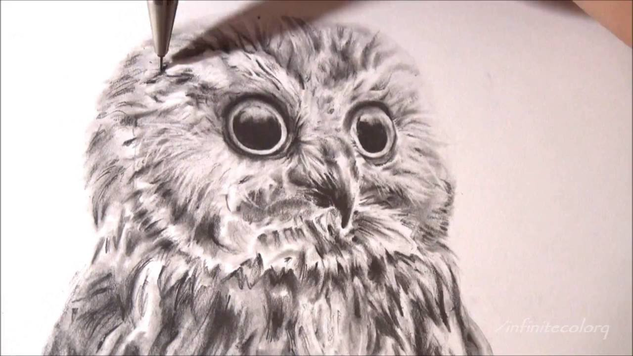 Uncategorized Drawing An Owl realistic owl speed drawing time lapse youtube
