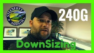Downsizing to 240 Gallon Aquarium - Starting to Prep - Live Blackworm Feeding