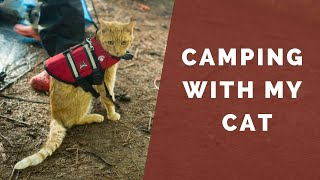 Camping with my Cat  Episode #004