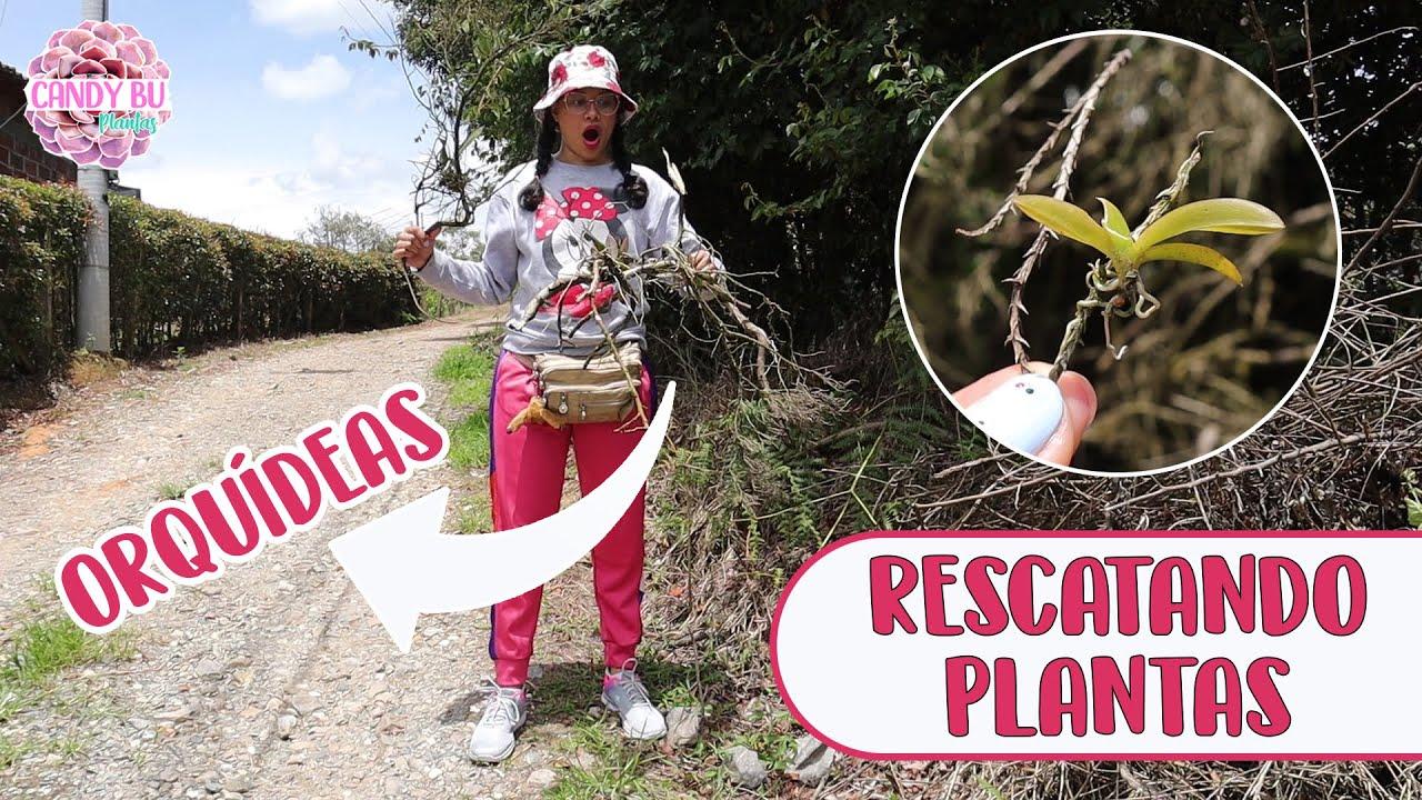 RECOGIENDO PLANTAS DE LA CALLE 2: No imaginas todas las que encontré │Candy Bu