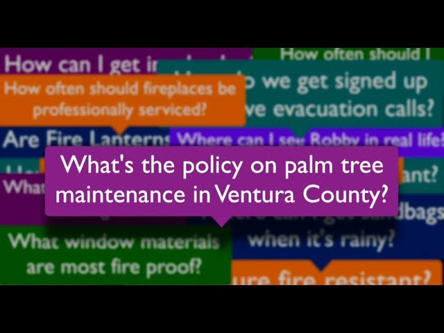 Robby to the Rescue! Palm Tree Maintenance