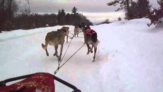 A View From The Cockpit | Mushing 18 Mph | 12 Dog Sprint Training