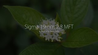 Sigma 19mm 2.8 Art Lens (Review By Jack Crofts)