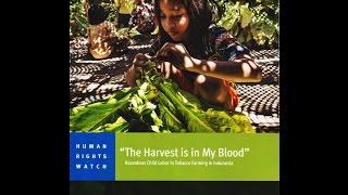 Indonesia: Child Labor in Tobacco Farming