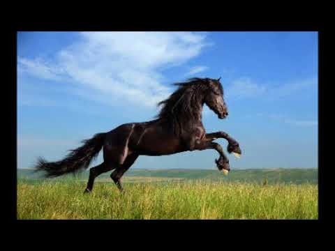 caballo que galopa los calis,,por ,,fernando de tu tia.