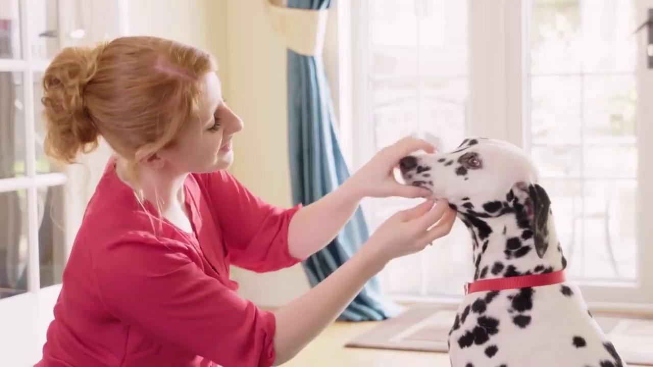 Beaphar Higiene dental perros