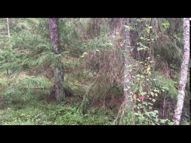 Filosofía en el bosque 37 La música Parte 2