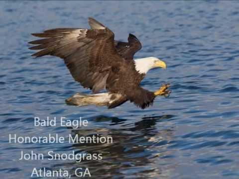 Atlanta Audubon Society 2012 Photo Contest Winners