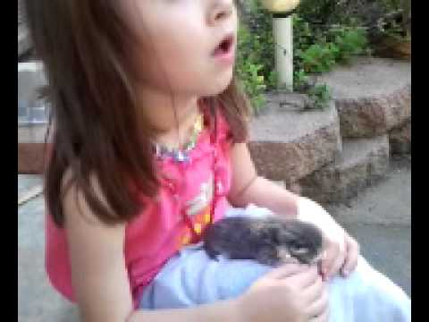Free baby kitten Please watch free kitten