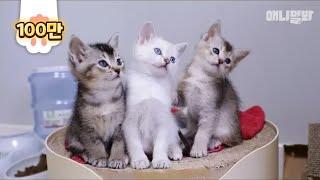 이거 보면 어느새 혼자 웃고있는 날 발견하게 됨.. 옆사람 주의ㅋㅣ Click These Kittens And They will Take Your Time Away LOL