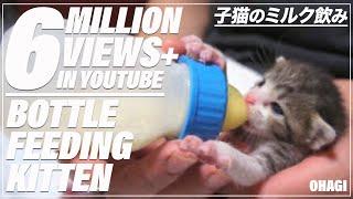 子猫のミルク飲み - Bottle Feeding Kitten - thumbnail
