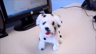 Flip Over Dog - Spot