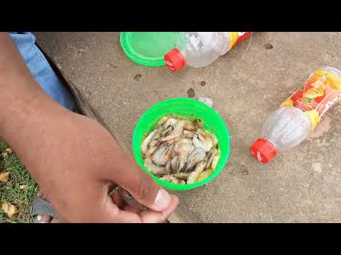 Fish hunting||Amazing catch fish with plastic bottle