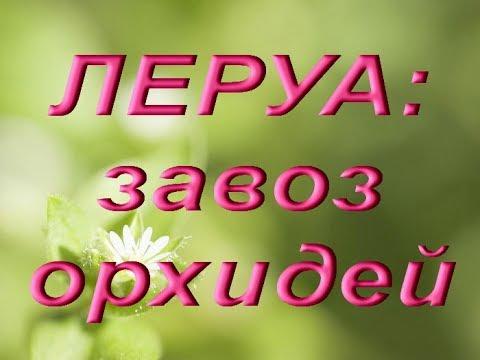ЛЕРУА:завоз ОРХИДЕЙ,купила БАБОЧКУ!!!