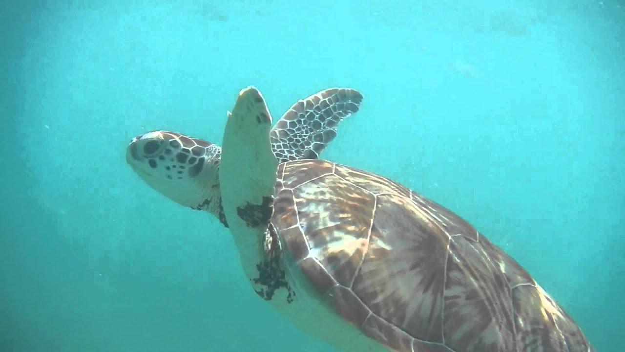 Turtle Beach Akumal Mexico
