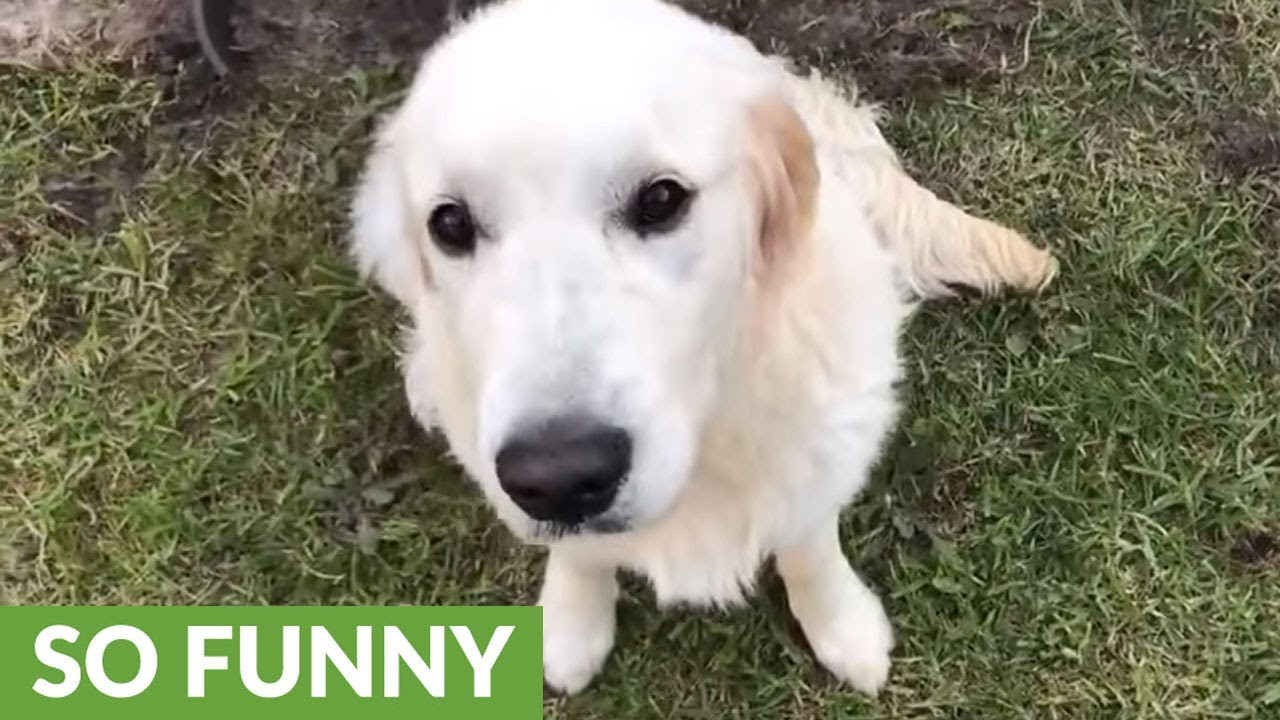 dog left alone completely destroys backyard youtube