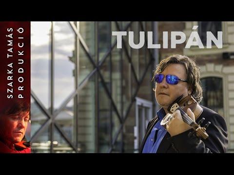Szarka Tamás – Tulipán (2017)
