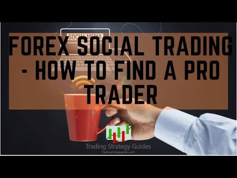 Forex Social Trading - How to Find a Pro Trader