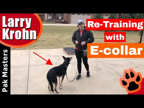 First lesson with fearful dog after harsh tactics failed with previous trainer