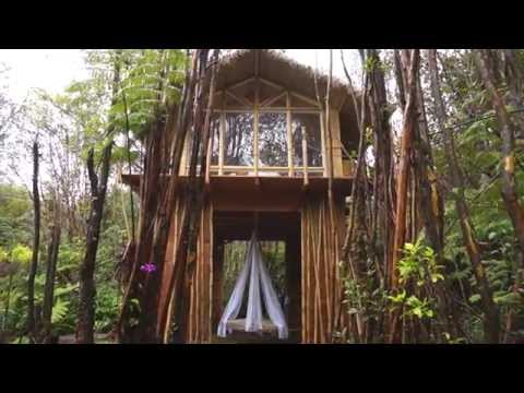 This Tiny Hawaiian Treehouse Is All Your Dreams Come True (And It's On AirBnB) | HuffPost Life