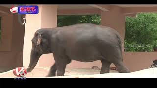Elephant Lost Life After Eating Fire-Cracker Filled Pineapple  Teenmaar News