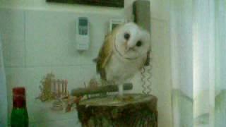 Owl 1/3