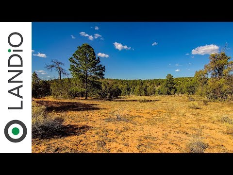 Land For Sale : 4.28 Wooded Acres on a Corner Lot in New Mexico
